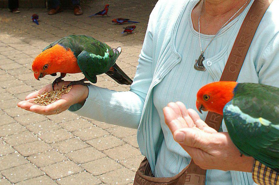 Systematic Dual Layer Bird Nest Parrot Bed Coral Fleece Warm Bird Parrot Shed Hammock Bird Supplies Bird Cages & Nests