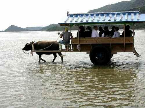 水牛車(その2)